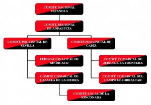 Organigrama CNT