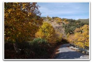 Carretera del Camino